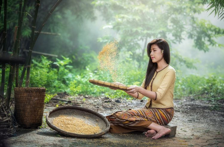 komosa ryżowa- warto jeść?