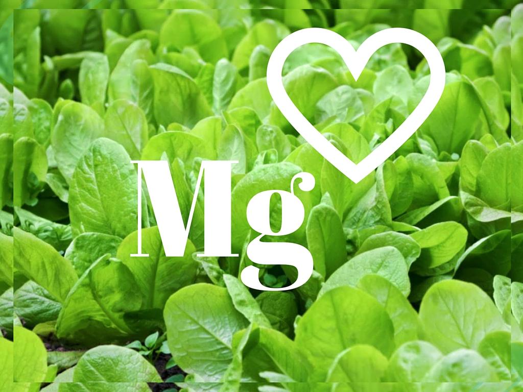 Magnez- niezastąpiony w każdej diecie!