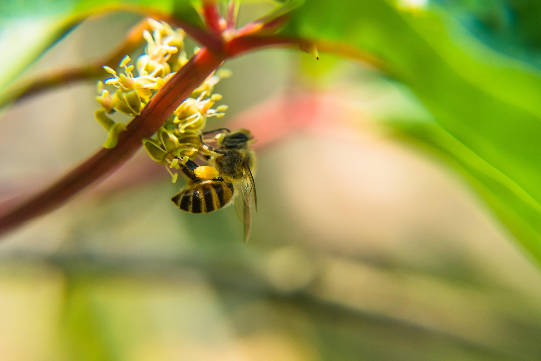 Pyłek pszczeli – superfoods !
