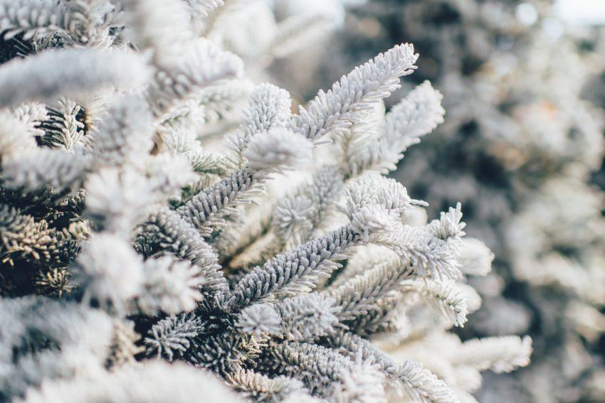Przykładowy jadłospis 1800 kcal na zimę!