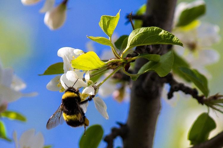 pyłek pszczeli na przeziębienie